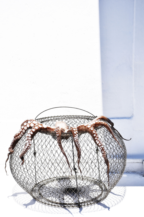 5_Caged_Octopus_Aegina_Greece_2017